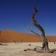 spianata di sabbia dune e alberi di acacia