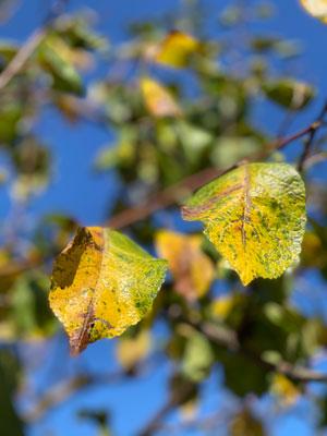 folie in autunno cambio di stagione
