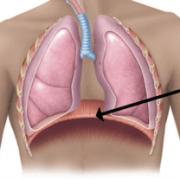 immagine del muscolo diaframma