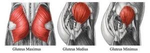 muscolatura dei glutei vista laterale