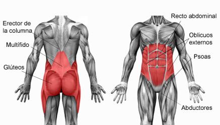 core muscoli